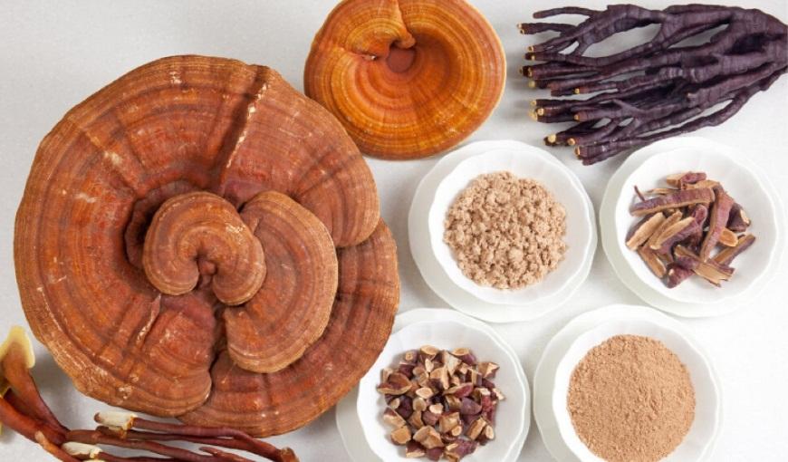 Tác dụng nấm linh chi