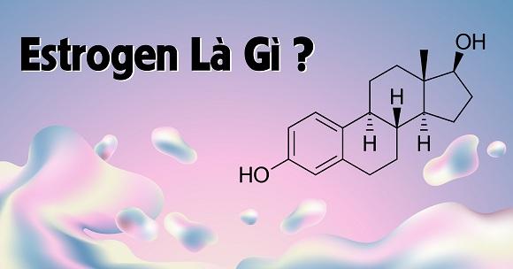 Estrogen là gì