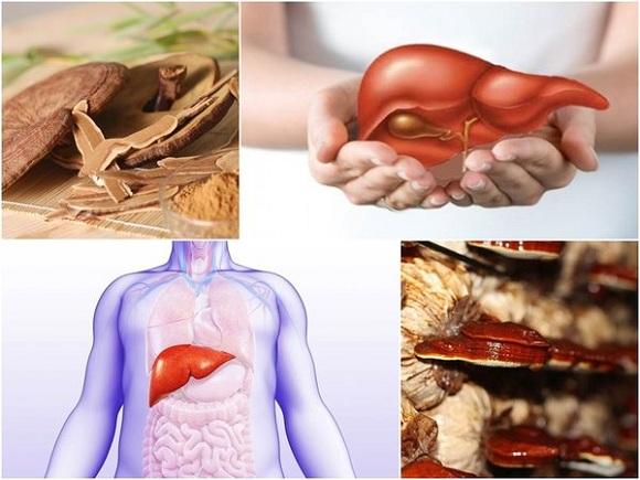Nấm linh chi có tác dụng giải độc gan rất tốt, giúp tăng cường sức khỏe.