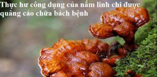 Thực hư công dụng của nấm linh chi được quảng cáo chữa bách bệnh