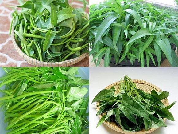 Tác dụng của rau muống chữa bệnh rất hiệu quả (3)